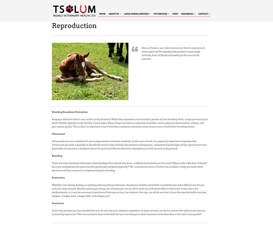Tsolum – Website